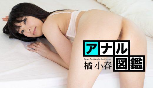 アナル図鑑 橘小春【カリビアンコム】